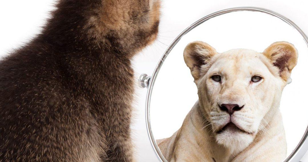 Il n'est jamais trop tard pour… changer de mindset !