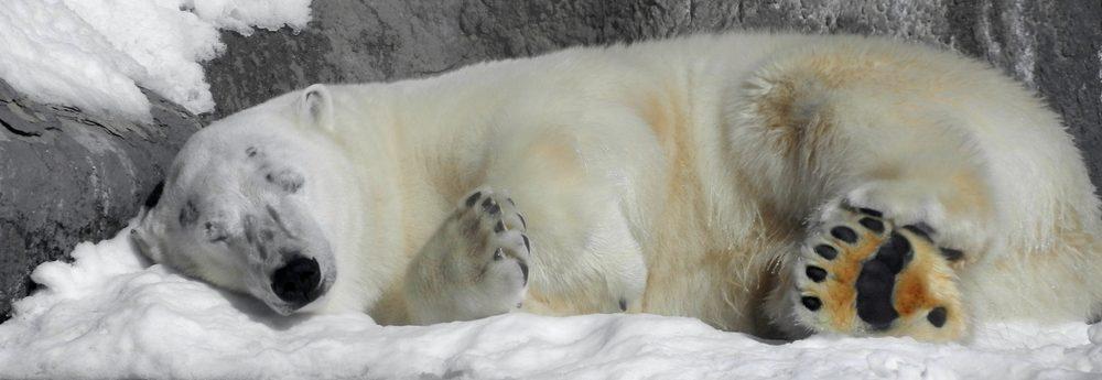 hibernation-procrastination-ladebloqueuse